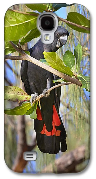 Cockatoo Galaxy S4 Case - Red-tailed Black-cockatoo Queensland by Martin Willis