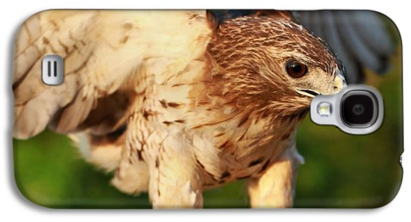 Red Tailed Hawk Hunting Galaxy S4 Case by Dan Sproul
