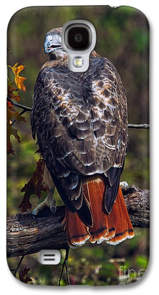 Red Tailed Hawk Galaxy S4 Case by Todd Bielby