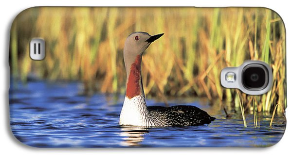 Red-throated Loon Galaxy S4 Case by Paul J. Fusco