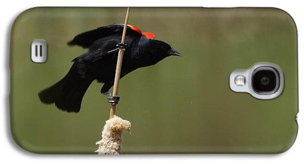 Red Winged Blackbird 3 Galaxy S4 Case by Ernie Echols
