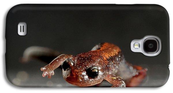 Salamanders Galaxy S4 Case - Redback Salamander Plethodon Cinereus by Aaron Ansarov