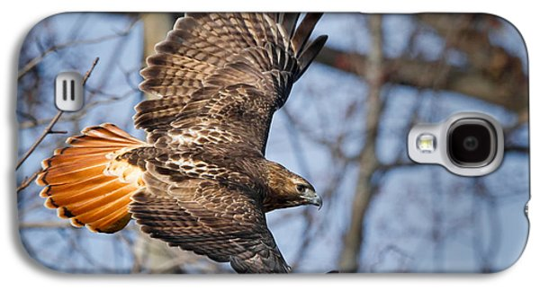 Redtail Hawk Galaxy S4 Case