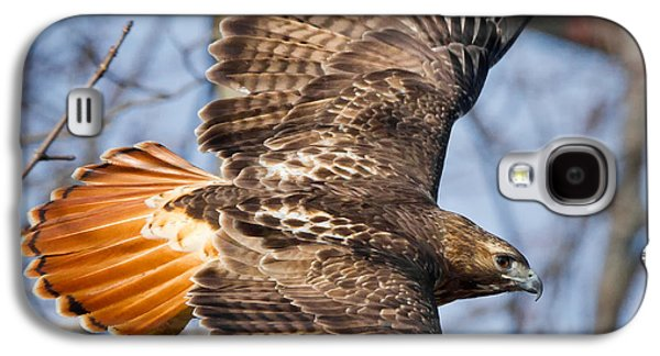 Redtail Hawk Square Galaxy S4 Case by Bill Wakeley