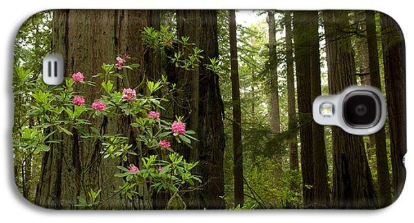 Redwood Trees And Rhododendron Flowers Galaxy S4 Case by Panoramic Images