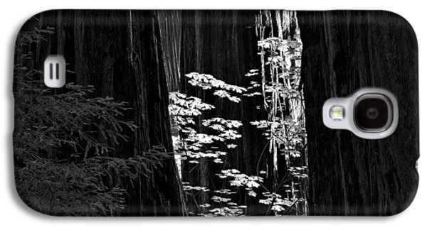 Redwoods Light And Texture Galaxy S4 Case
