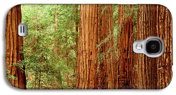 Redwoods Muir Woods Ca Usa Galaxy S4 Case by Panoramic Images