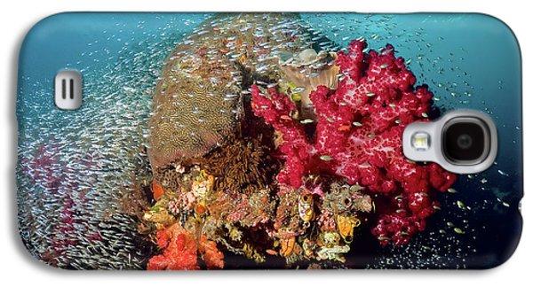 Reef Scenics, Raja Ampat Islands, Irian Galaxy S4 Case by Jaynes Gallery