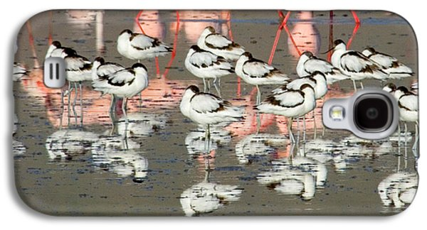 Reflection Of Avocets And Flamingos Galaxy S4 Case by Panoramic Images