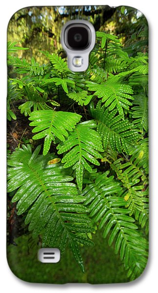Resurrection Fern, Pleopeltis Galaxy S4 Case