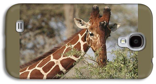Reticulated Giraffe Feeding On Acacia Galaxy S4 Case