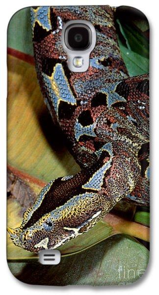Rhino Viper Galaxy S4 Case by Gregory G. Dimijian, M.D.