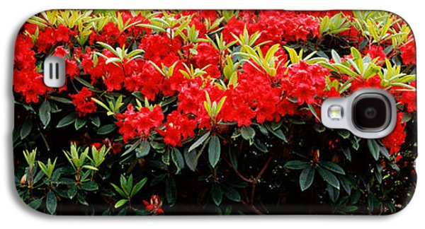Rhododendrons Plants In A Garden, Shore Galaxy S4 Case