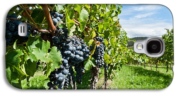 Ripe Grapes Right Before Harvest In The Summer Sun Galaxy S4 Case by Ulrich Schade