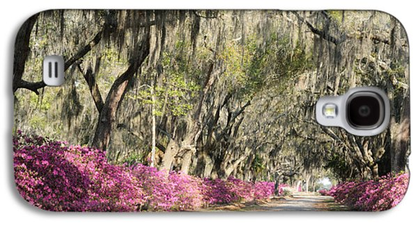Road With Azaleas And Live Oaks Galaxy S4 Case