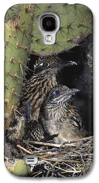 Roadrunners In Nest Galaxy S4 Case by Anthony Mercieca