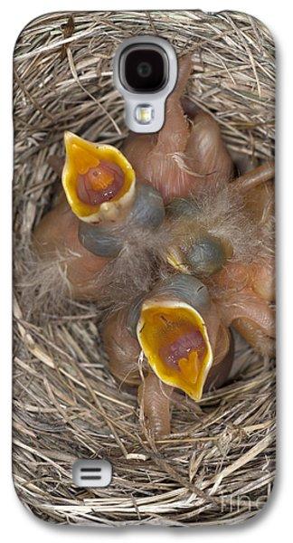 Robin Nestlings Galaxy S4 Case by Scott Camazine