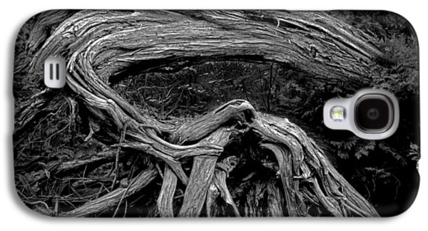 Roots Of A Fallen Tree By Wawa Ontario In Black And White Galaxy S4 Case by Randall Nyhof