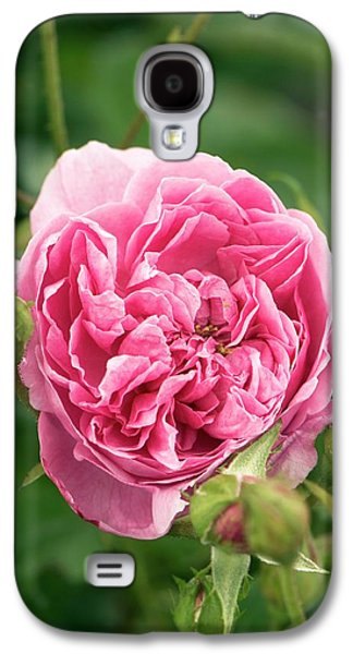 Rose (rosa 'harlow Carr' ) Flower Galaxy S4 Case by Adrian Thomas
