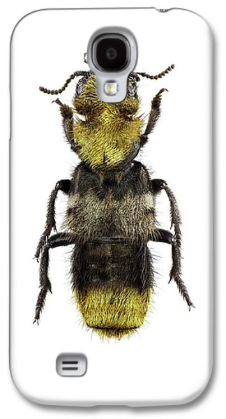 Rove Beetle Galaxy S4 Case