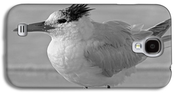 Royal Tern On Siesta Key Galaxy S4 Case by Betsy Knapp
