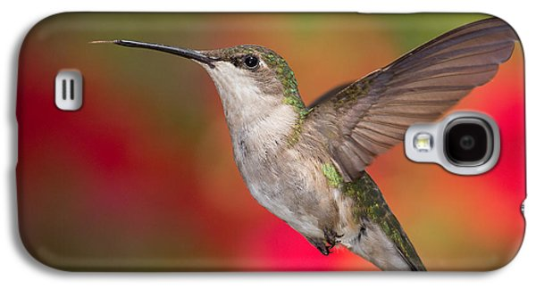 Ruby Throated Hummingbird Galaxy S4 Case