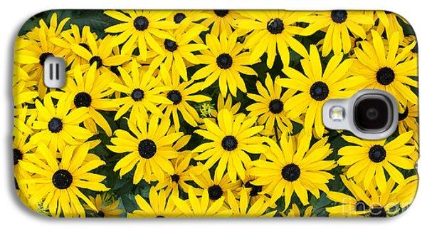 Rudbeckia Fulgida 'pot Of Gold'  Galaxy S4 Case by Tim Gainey