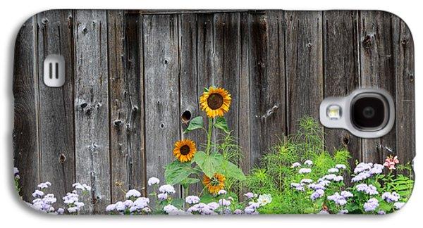 Rustic Barnwood Sunflower Galaxy S4 Case by Bill Wakeley