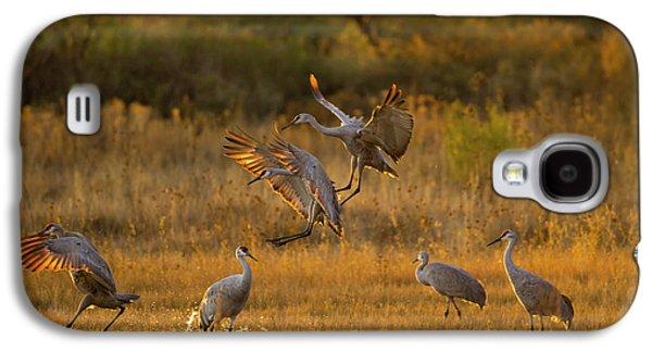 Sandhill Cranes (grus Canadensis Galaxy S4 Case
