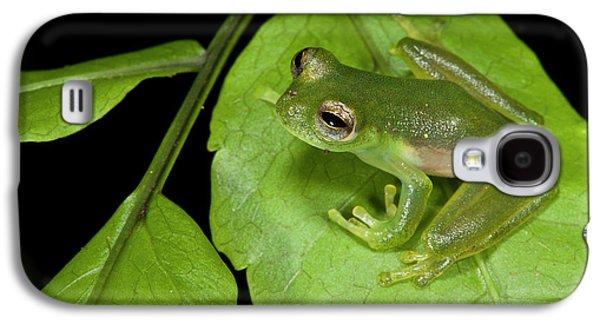 Santa Cecilia Glass Frog (cochranella Galaxy S4 Case by Pete Oxford
