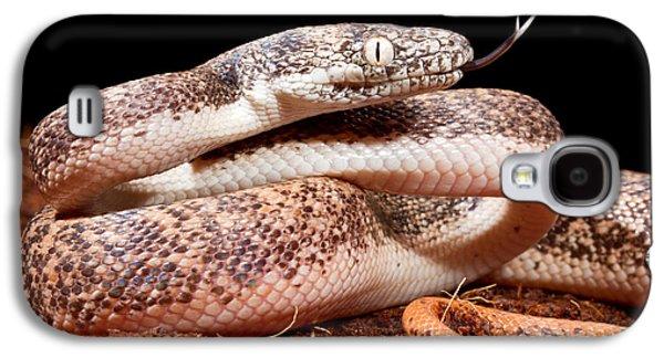 Savu Python In Defensive Posture Galaxy S4 Case by David Kenny