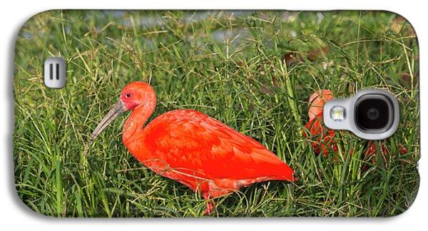 Scarlet Ibis (eudocimus Ruber Galaxy S4 Case