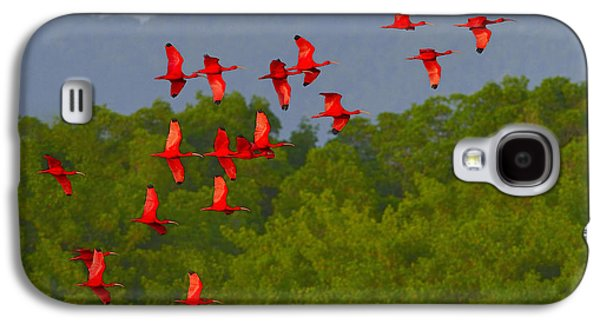 Scarlet Ibis Galaxy S4 Case by Tony Beck
