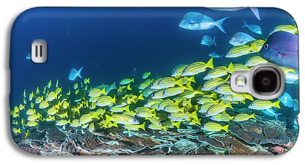 School Of Bluestripe Snappers Lutjanus Galaxy S4 Case by Panoramic Images