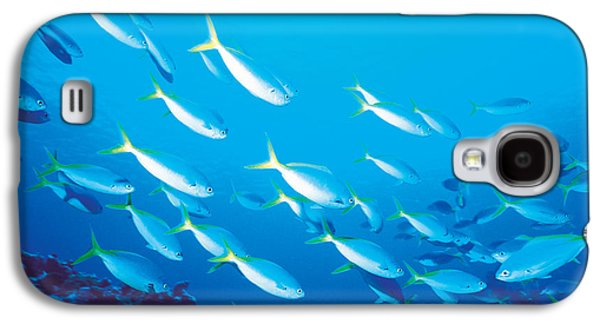 School Of Fish, Underwater Galaxy S4 Case by Panoramic Images