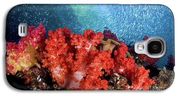 Schooling Baitfish Swim Past Coral Galaxy S4 Case by Jaynes Gallery