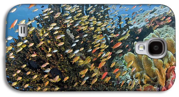 Schooling Fish Swim Past Reef Corals Galaxy S4 Case by Jaynes Gallery