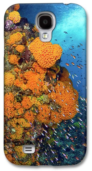 Schooling Fusiliers And Anthias Swim Galaxy S4 Case by Jaynes Gallery