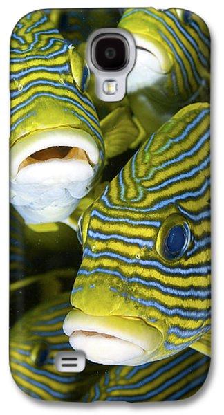 Schooling Sweetlip Fish, Raja Ampat Galaxy S4 Case by Jaynes Gallery