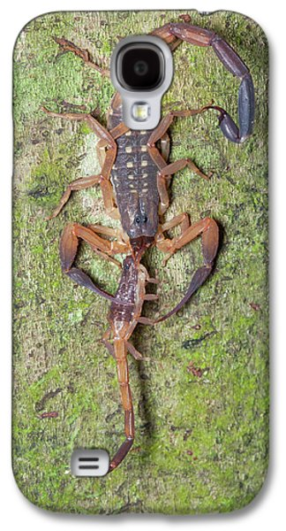 Scorpion With Prey Galaxy S4 Case by Melvyn Yeo