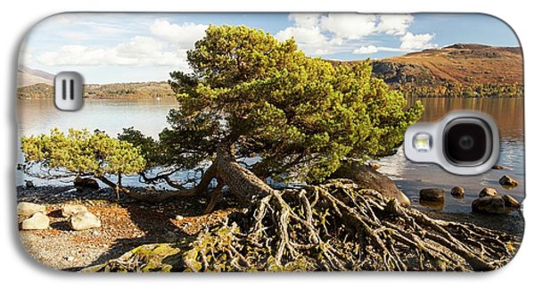 Scots Pine On Lake Shore Galaxy S4 Case by Ashley Cooper