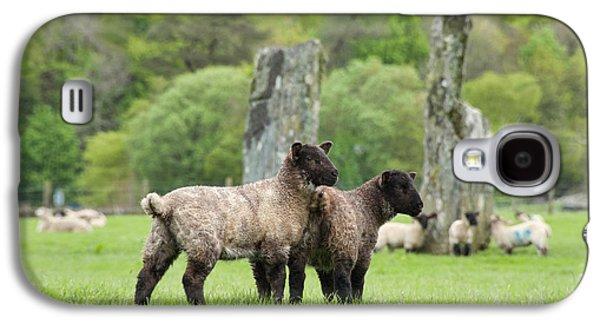 Scottish Sheep Galaxy S4 Case by Juli Scalzi