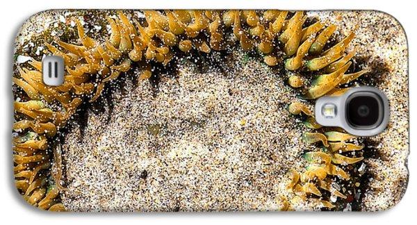 Sea Anenome In The Sand Galaxy S4 Case