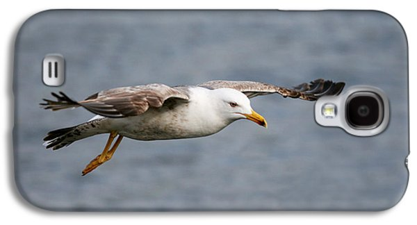 Sea Gull Galaxy S4 Case by Charlie Photographer