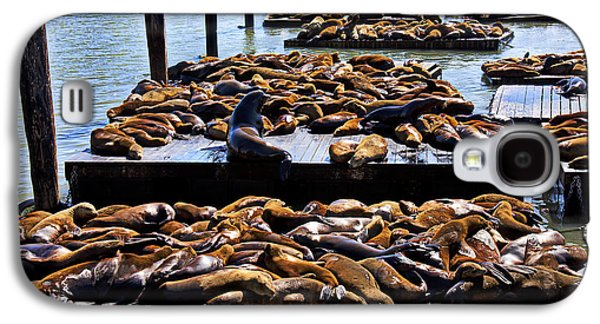 Sea Lions At Pier 39  Galaxy S4 Case