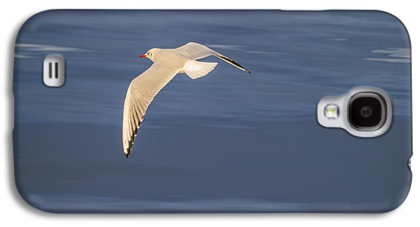 Seagull Flying Low Over Reykjavik Galaxy S4 Case by Panoramic Images