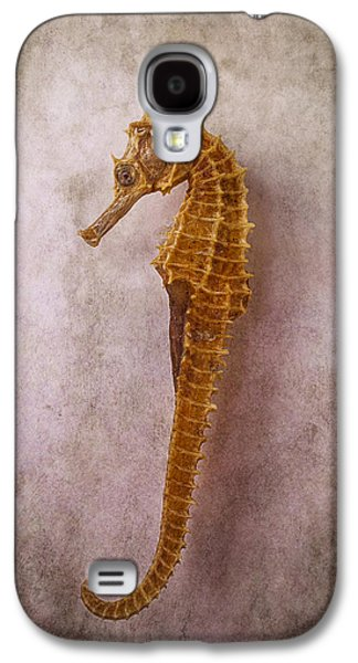 Seahorse Still Life Galaxy S4 Case by Garry Gay