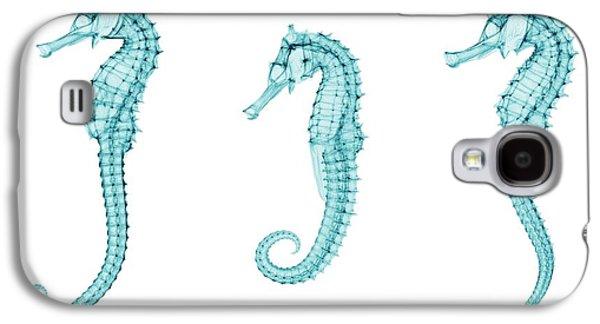 Seahorses Galaxy S4 Case by Brendan Fitzpatrick