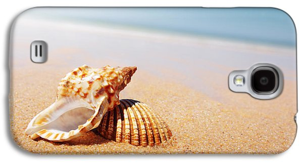 Seashell And Conch Galaxy S4 Case by Carlos Caetano