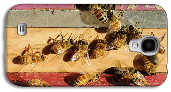 Seattle Honeybees At Entrance To Beehive Galaxy S4 Case by Matt Freedman